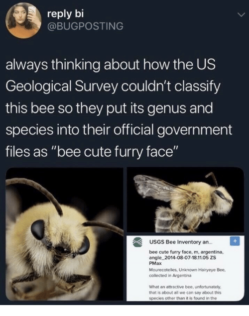 """Survey: reply bi  @BUGPOSTING  always thinking about how the US  Geological Survey couldn't classify  this bee so they put its genus and  species into their official government  files as """"bee cute furry face""""  USGS Bee Inventory an.  bee cute furry face, m, argentina,  angle 2014-08-07-18.11.05 ZS  PMax  Mourecotelles, Unknown Hairyeye Bee,  collected in Argentina  What an attractive bee, unfortunately  that is about all we can say about this  species other than it is found in the"""