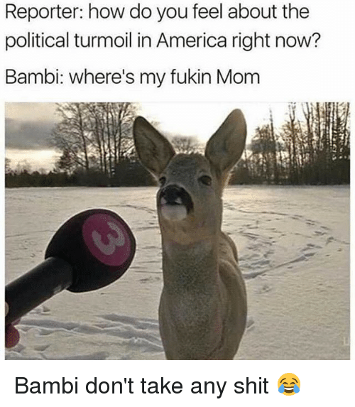 turmoil: Reporter: how do you feel about the  political turmoil in America right now?  Bambi: where's my fukin Mom Bambi don't take any shit 😂
