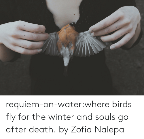 Tumblr, Winter, and Birds: requiem-on-water:where birds fly for the winter and souls go after death. by Zofia Nalepa