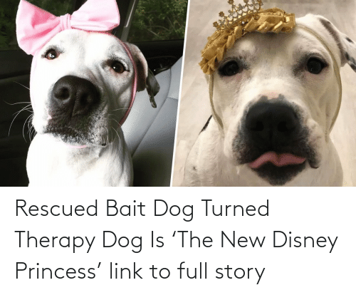 add:   Rescued Bait Dog Turned Therapy Dog Is 'The New Disney Princess'  link to full story