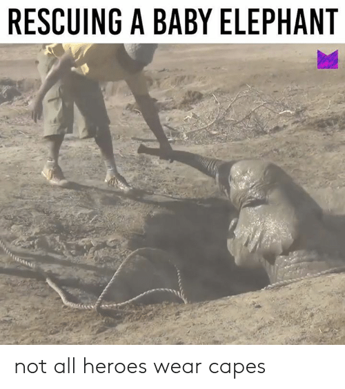Dank, Elephant, and Heroes: RESCUING A BABY ELEPHANT not all heroes wear capes