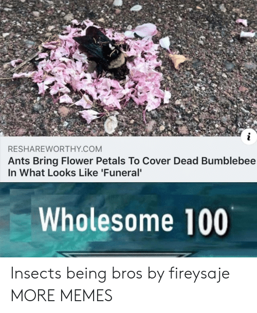 Dank, Memes, and Target: RESHAREWORTHY COM  Ants Bring Flower Petals To Cover Dead Bumblebee  In What Looks Like 'Funeral  Wholesome 100 Insects being bros by fireysaje MORE MEMES
