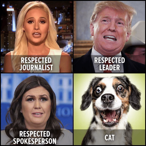 Cat, Journalist, and Leader: RESPECTED  JOURNALIST  RESPECTED  LEADER  RESPECTED  SPOKESPERSON  CAT