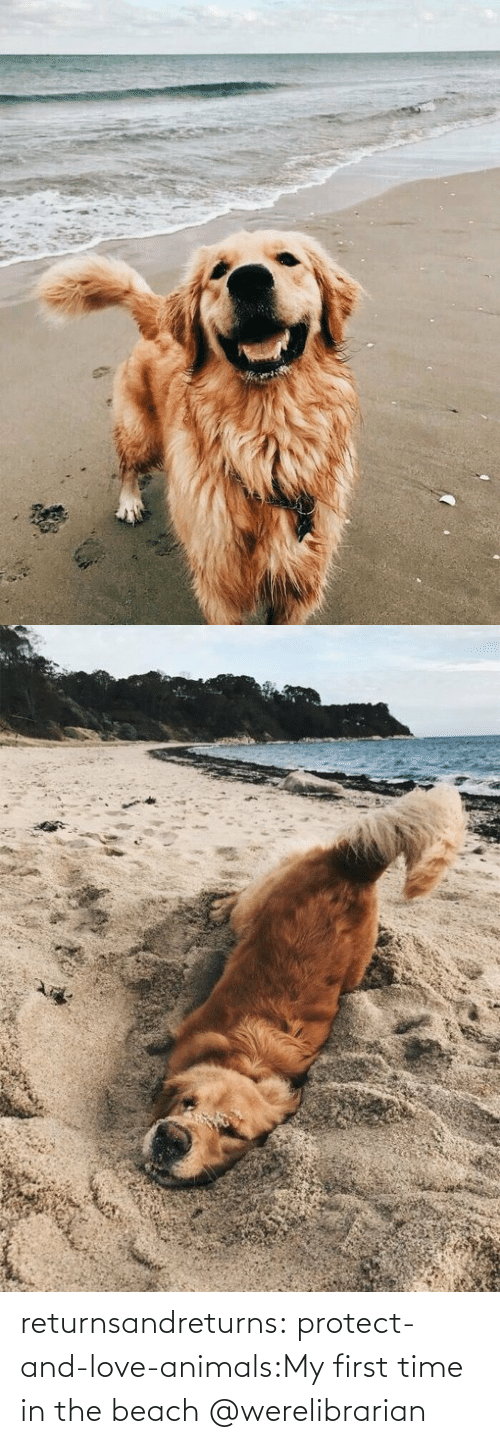 Animals: returnsandreturns:  protect-and-love-animals:My first time in the beach @werelibrarian