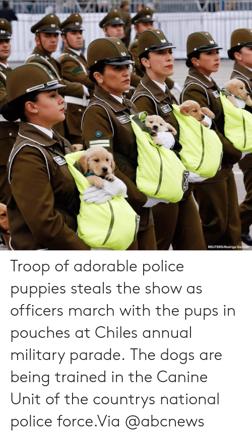 Dogs, Instagram, and Police: REUTERS/Rodrigo Ga Troop of adorable police puppies steals the show as officers march with the pups in pouches at Chiles annual military parade. The dogs are being trained in the Canine Unit of the countrys national police force.Via @abcnews