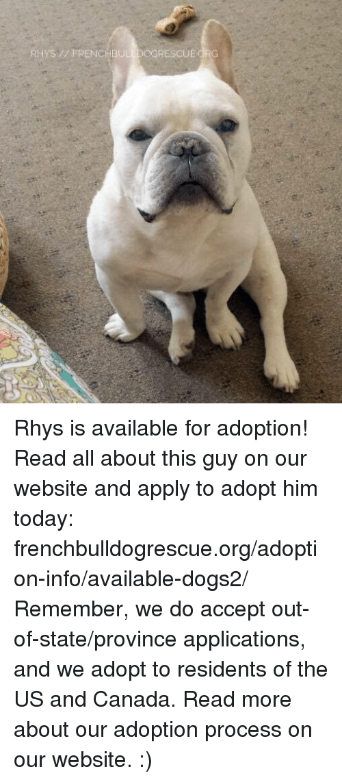 Memes, Canada, and Accepted: RHYS FRENCHBULLDOGRESCUEORG Rhys is available for adoption! Read all about this guy on our website <location, likes, dislikes> and apply to adopt him today: frenchbulldogrescue.org/adoption-info/available-dogs2/  Remember, we do accept out-of-state/province applications, and we adopt to residents of the US and Canada. Read more about our adoption process on our website. :)