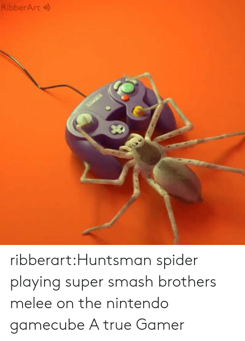 Nintendo: RibberArt) ribberart:Huntsman spider playing super smash brothers melee on the nintendo gamecube  A true Gamer