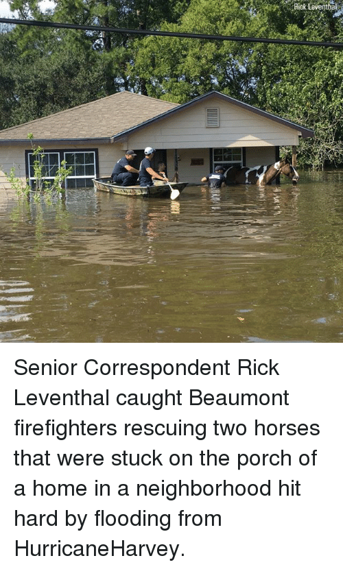 seniority: Riok Leventhal Senior Correspondent Rick Leventhal caught Beaumont firefighters rescuing two horses that were stuck on the porch of a home in a neighborhood hit hard by flooding from HurricaneHarvey.