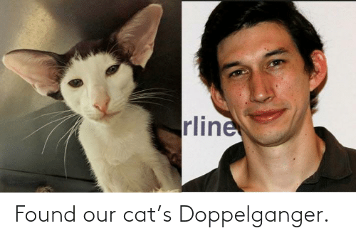 doppelganger: rline Found our cat's Doppelganger.
