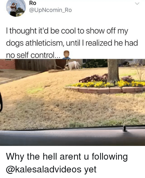 Dogs, Memes, and Control: Ro  @UpNcomin_Ro  thought it'd be cool to show off my  dogs athleticism, until T realized he had  no self control Why the hell arent u following @kalesaladvideos yet