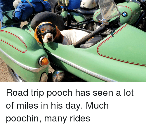 Road Trip, Day, and Trip: Road trip pooch has seen a lot of miles in his day. Much poochin, many rides