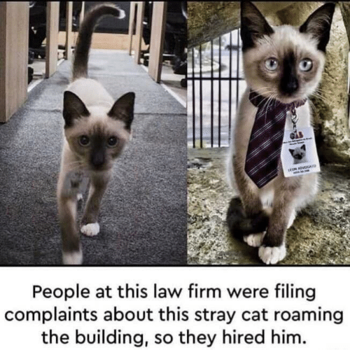 ron: rON ADVOGAU  People at this law firm were filing  complaints about this stray cat roaming  the building, so they hired him.