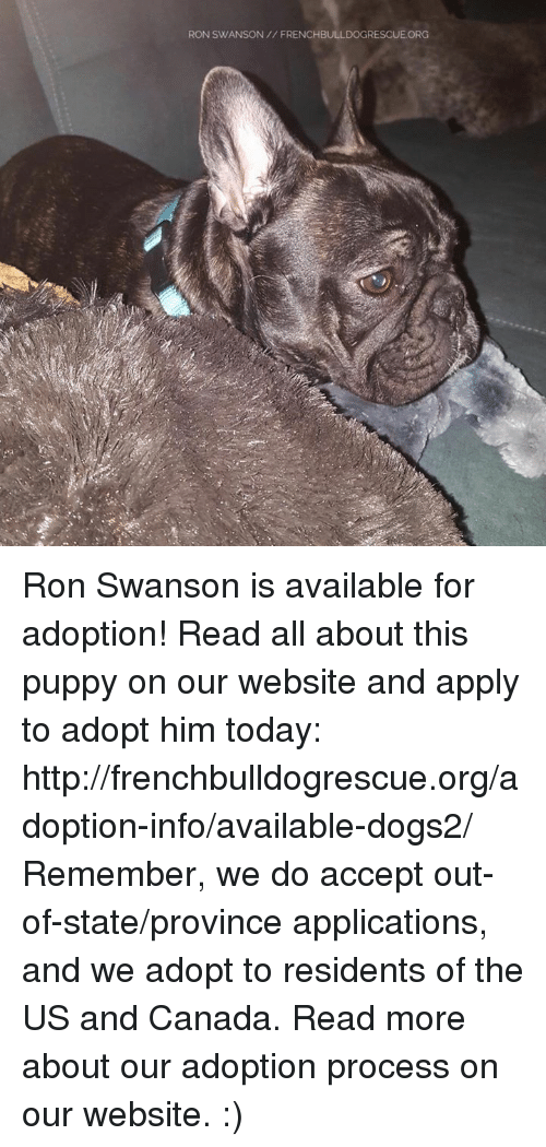 Memes, Ron Swanson, and 🤖: RON SWANSON FRENCHBULLDOGRESCUE ORG Ron Swanson is available for adoption! Read all about this puppy on our website <location, likes, dislikes> and apply to adopt him today: http://frenchbulldogrescue.org/adoption-info/available-dogs2/  Remember, we do accept out-of-state/province applications, and we adopt to residents of the US and Canada. Read more about our adoption process on our website. :)