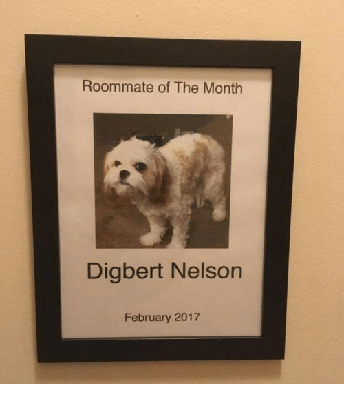 Roommate, Nelson, and February: Roommate of The Month  Digbert Nelson  February 2017