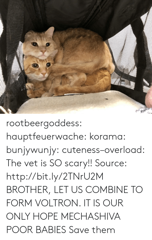 vet: rootbeergoddess: hauptfeuerwache:  korama:   bunjywunjy:  cuteness–overload:   The vet is SO scary!! Source: http://bit.ly/2TNrU2M   BROTHER, LET US COMBINE TO FORM VOLTRON. IT IS OUR ONLY HOPE   MECHASHIVA   POOR BABIES   Save them