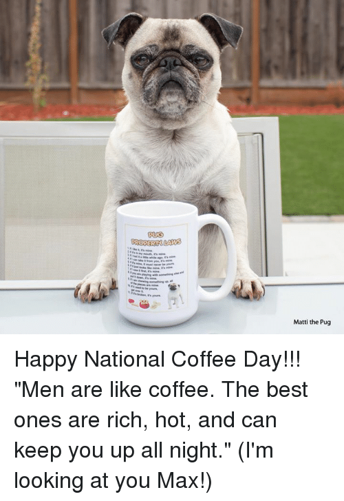 """Memes, Ups, and Best: RORERAN LAW  Matti the Pug Happy National Coffee Day!!! """"Men are like coffee. The best ones are rich, hot, and can keep you up all night."""" (I'm looking at you Max!)"""