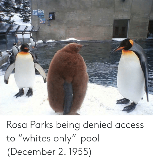 "Rosa Parks, Access, and Pool: Rosa Parks being denied access to ""whites only""-pool (December 2. 1955)"