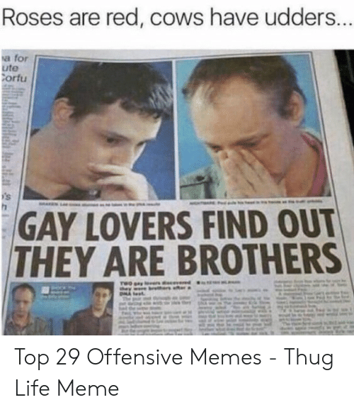 Life, Meme, and Memes: Roses are red, cows have udders..  a for  ute  ortu  GAY LOVERS FIND OUT  THEY ARE BROTHERS Top 29 Offensive Memes - Thug Life Meme