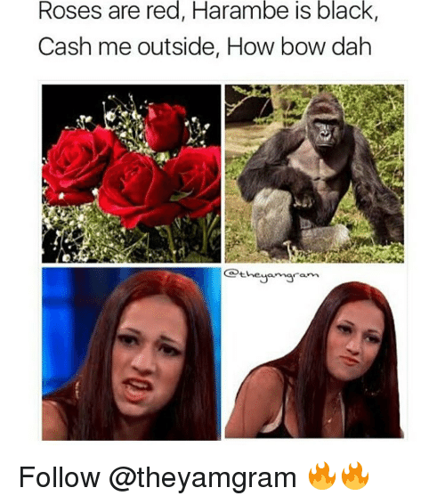 Haramber: Roses are red, Harambe is black,  Cash me outside, How bow dah  heya maram Follow @theyamgram 🔥🔥
