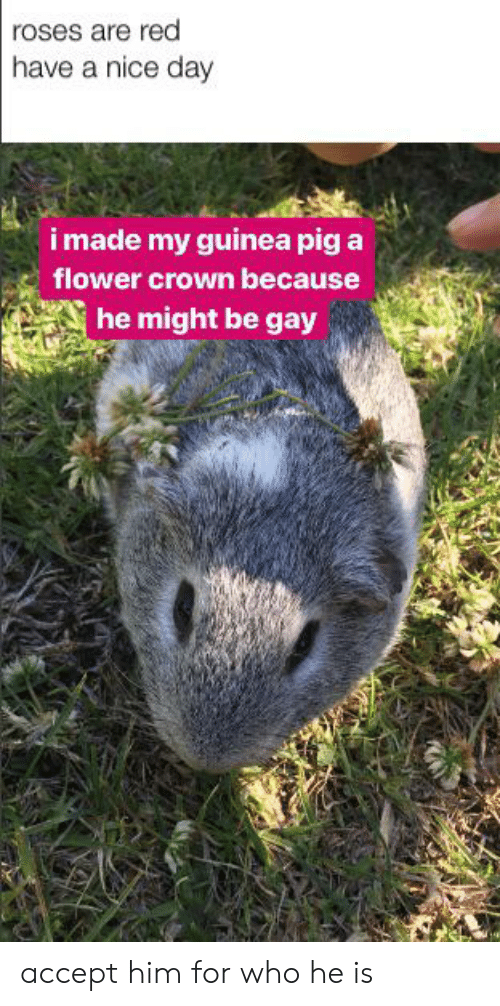 Reddit, Flower, and Guinea Pig: roses are red  have a nice day  imade my guinea pig a  flower crown because  he might be gay accept him for who he is