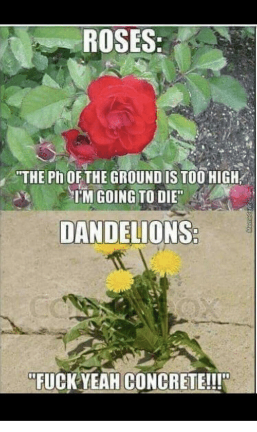 "Fuck, Too High, and Roses: ROSES  THE Ph OFTHE GROUND IS TOO HIGH  TM GOING TO DIE  DANDELIONS  ""FUCK YEAHCONCRETE!!!"