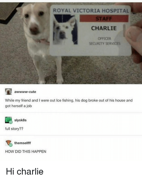 Charlie, Cute, and Memes: ROYAL VICTORIA HOSPITAL  STAFF  CHARLIE  OFFICER  SECURITY SERVICES  awwww-cute  While my friend and I were out Ice fishing, his dog broke out of his house and  got herself a job  slysk8s  full story??  themselfff  HOW DID THIS HAPPEN Hi charlie