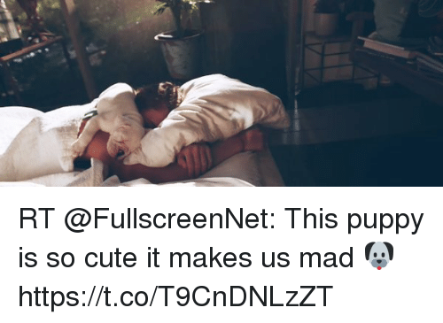 Cute, Funny, and Puppy: RT @FullscreenNet: This puppy is so cute it makes us mad 🐶 https://t.co/T9CnDNLzZT