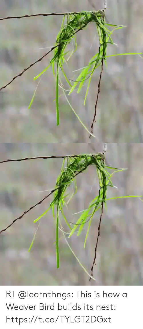 Its: RT @learnthngs: This is how a Weaver Bird builds its nest: https://t.co/TYLGT2DGxt