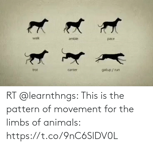 Animals: RT @learnthngs: This is the pattern of movement for the limbs of animals: https://t.co/9nC6SlDV0L