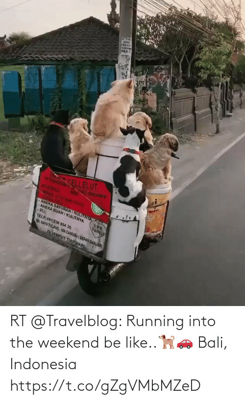 Indonesia: RT @TraveIbIog: Running into the weekend be like..🐕🚗 Bali, Indonesia https://t.co/gZgVMbMZeD