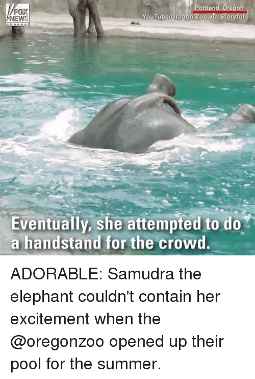 Memes, youtube.com, and Summer: rtland, Oregon  YouTube/Oregon Zoo via Storyfuf  FOX  Eventually, she attempted to do  a handstand for the crowd ADORABLE: Samudra the elephant couldn't contain her excitement when the @oregonzoo opened up their pool for the summer.