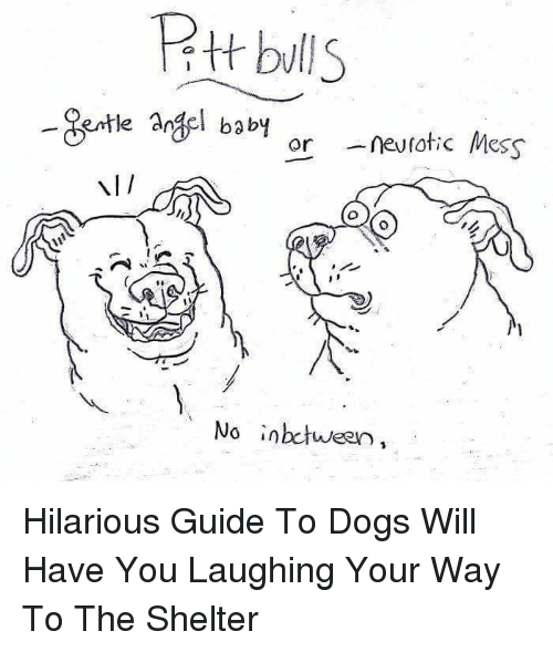 Dogs, Hilarious, and Baby: Rtt blls  Bentle Argel baby  ornevtotic Mess  NI/  No inbctween, Hilarious Guide To Dogs Will Have You Laughing Your Way To The Shelter