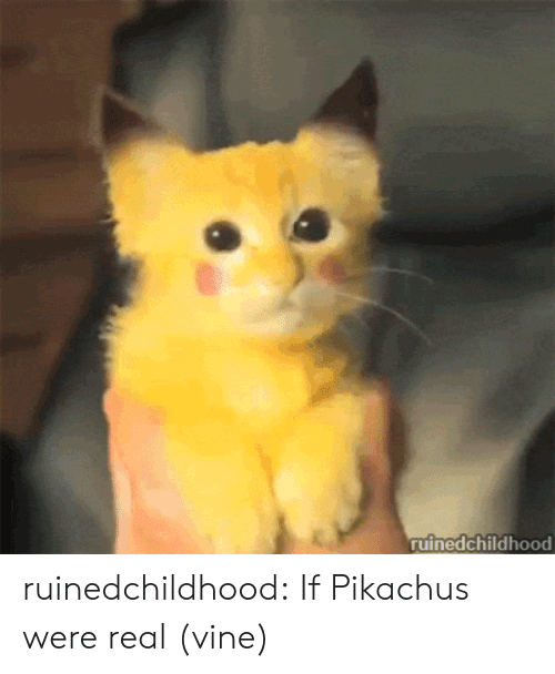Target, Tumblr, and Vine: ruinedchildhood ruinedchildhood:  If Pikachus were real (vine)