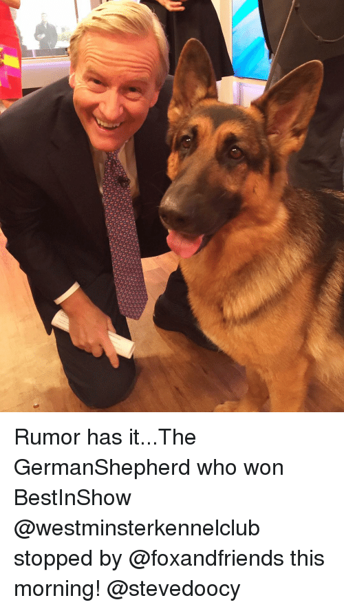 Memes, 🤖, and Who: Rumor has it...The GermanShepherd who won BestInShow @westminsterkennelclub stopped by @foxandfriends this morning! @stevedoocy