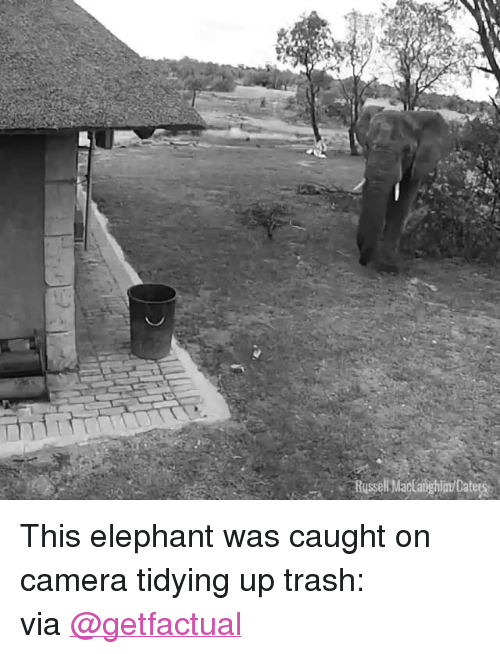 "Target, Trash, and Twitter: Russell Madaighim/Catea <p>This elephant was caught on camera tidying up trash:<br/></p><p>via <a href=""https://twitter.com/GetFactual/status/929906867115053056"" target=""_blank"">@getfactual</a></p>"