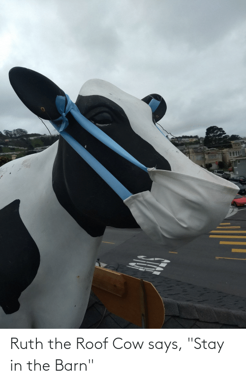 """Stay In: Ruth the Roof Cow says, """"Stay in the Barn"""""""