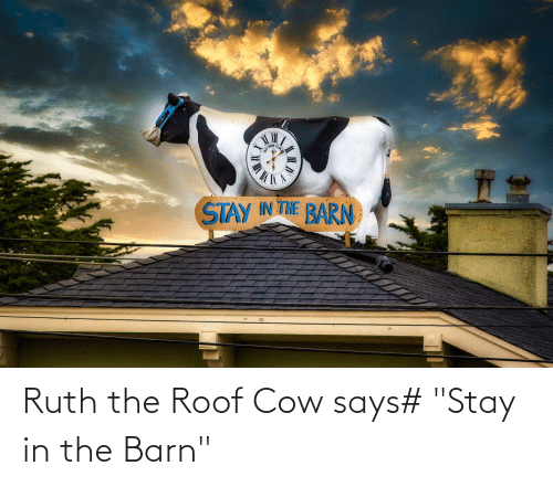 """Stay In: Ruth the Roof Cow says# """"Stay in the Barn"""""""