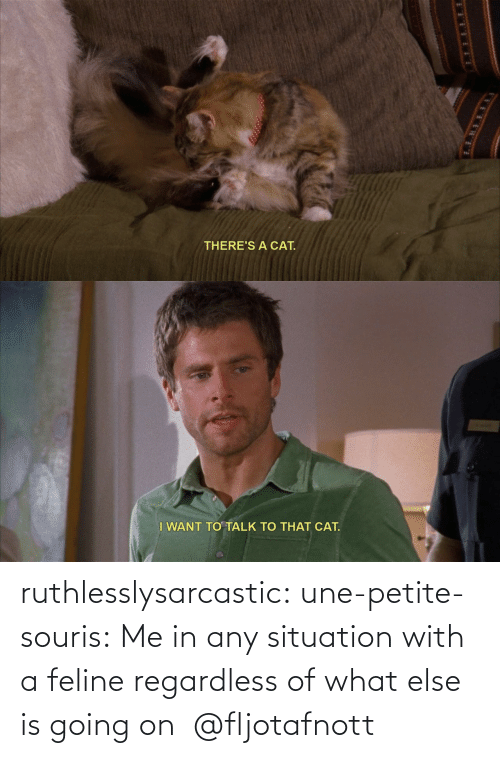 else: ruthlesslysarcastic:  une-petite-souris: Me in any situation with a feline regardless of what else is going on @fljotafnott