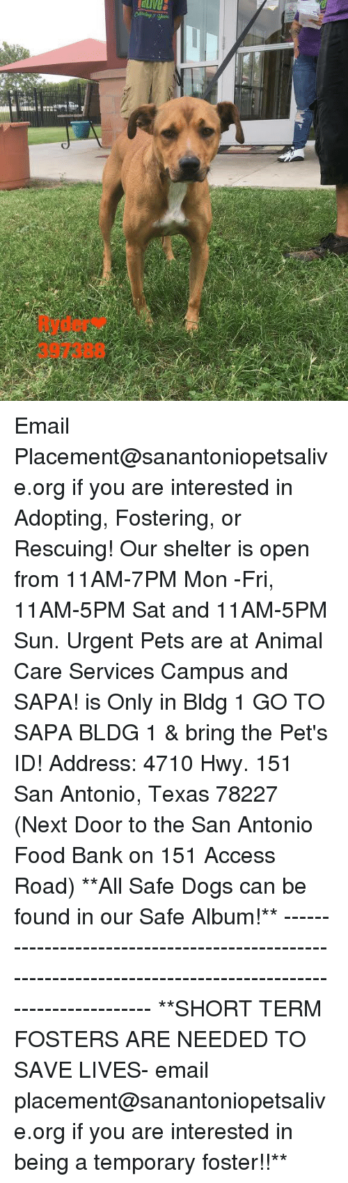 Dogs, Food, and Memes: Ryder  397388 Email Placement@sanantoniopetsalive.org if you are interested in Adopting, Fostering, or Rescuing!  Our shelter is open from 11AM-7PM Mon -Fri, 11AM-5PM Sat and 11AM-5PM Sun.  Urgent Pets are at Animal Care Services Campus and SAPA! is Only in Bldg 1 GO TO SAPA BLDG 1 & bring the Pet's ID! Address: 4710 Hwy. 151 San Antonio, Texas 78227 (Next Door to the San Antonio Food Bank on 151 Access Road)  **All Safe Dogs can be found in our Safe Album!** ---------------------------------------------------------------------------------------------------------- **SHORT TERM FOSTERS ARE NEEDED TO SAVE LIVES- email placement@sanantoniopetsalive.org if you are interested in being a temporary foster!!**