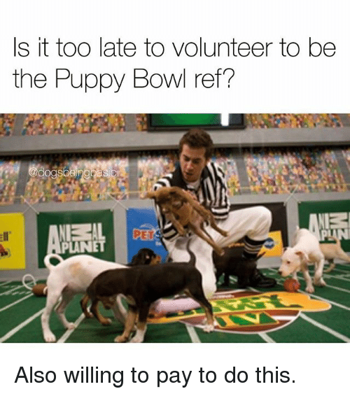 Memes, Puppy, and Bowl: s it toO late to volunteer to be  the Puppy Bowl ref?  PLANET Also willing to pay to do this.