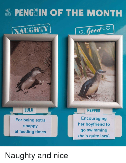 Lazy, Aquarium, and Quite: S PENG IN OF THE MONTH  NATIONA  AQUARIUM  NAUGHIY  LULU  For being extra  snappy  at feeding times  PEPPER  Encouraging  her boyfriend to  go swimming  (he's quite lazy) Naughty and nice