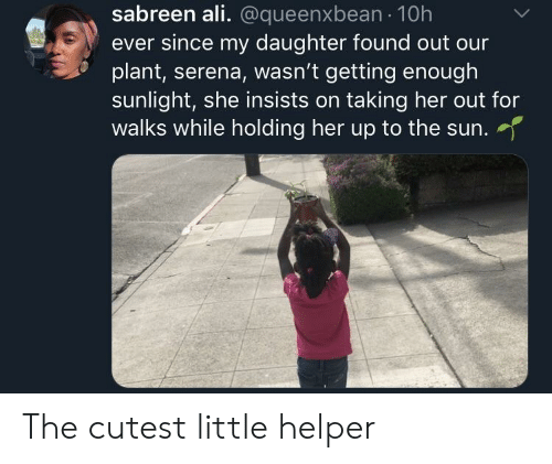 serena: sabreen ali. @queenxbean 10h  ever since my daughter found out our  plant, serena, wasn't getting enough  sunlight, she insists on taking her out for  walks while holding her up to the sun.  her up to the sun. The cutest little helper