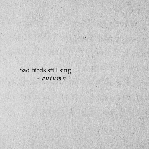 Birds, Sad, and Still: Sad birds still sing.  -autum n