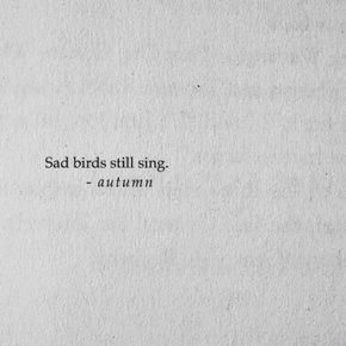 Birds, Sad, and Still: Sad birds still sing.  autumn