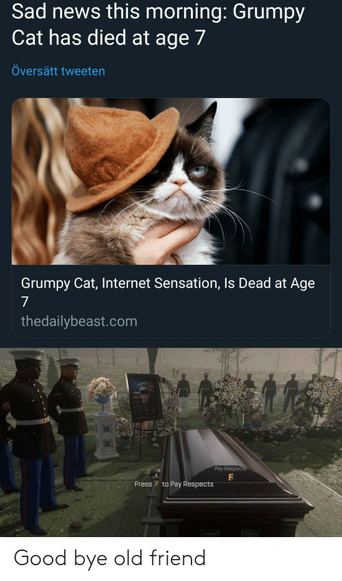 Internet, News, and Grumpy Cat: Sad news this morning: Grumpy  Cat has died at age 7  Oversätt tweeten  Grumpy Cat, Internet Sensation, Is Dead at Age  7  thedallybeast.com  Poy Respec  Press F to Pay Respects Good bye old friend