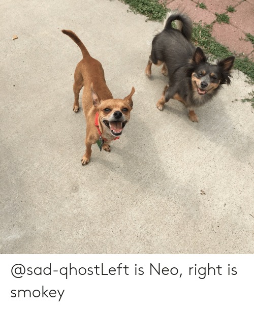 Sad, Class, and Neo: @sad-qhostLeft is Neo, right is smokey