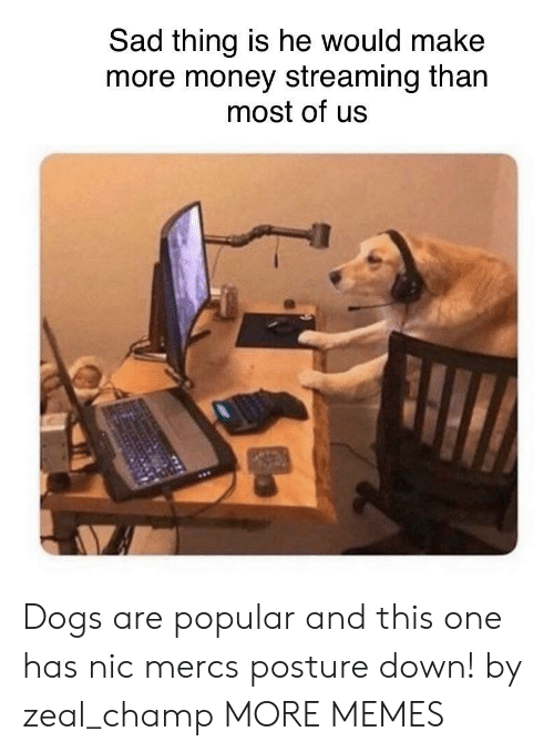 Dank, Dogs, and Memes: Sad thing is he would make  more money streaming than  most of us Dogs are popular and this one has nic mercs posture down! by zeal_champ MORE MEMES