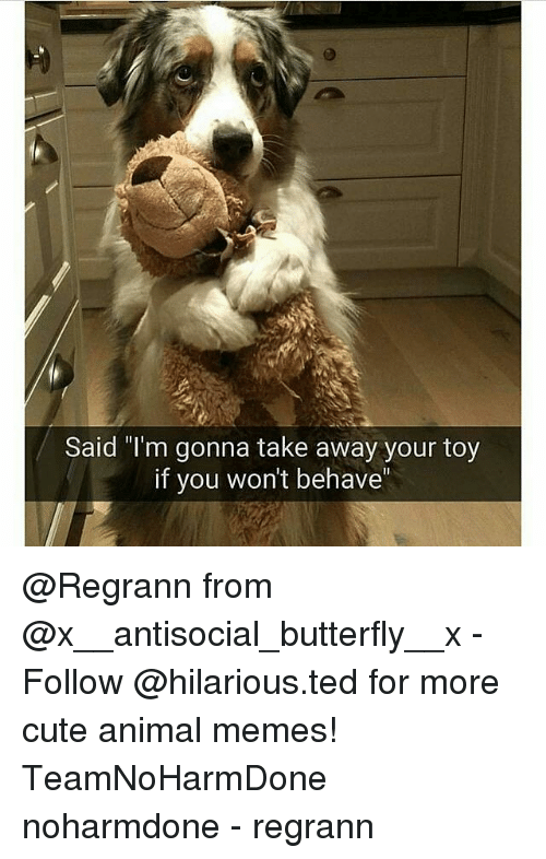 "Anime, Cute Animals, and Memes: Said ""I'm gonna take away your toy  if you won't behave @Regrann from @x__antisocial_butterfly__x - Follow @hilarious.ted for more cute animal memes! TeamNoHarmDone noharmdone - regrann"