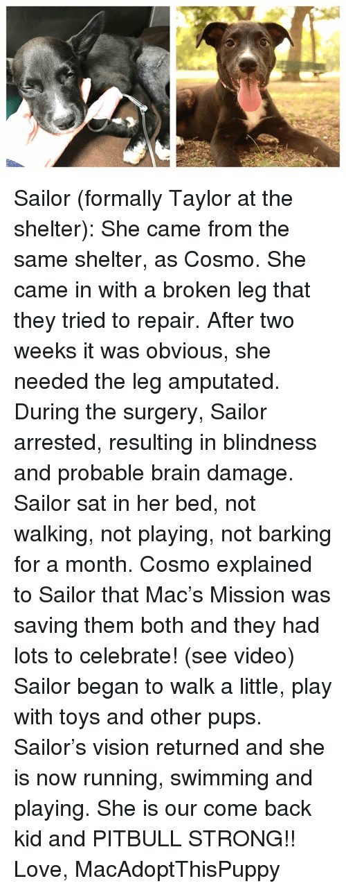 Love, Memes, and Pitbull: Sailor (formally Taylor at the shelter): She came from the same shelter, as Cosmo. She came in with a broken leg that they tried to repair. After two weeks it was obvious, she needed the leg amputated. During the surgery, Sailor arrested, resulting in blindness and probable brain damage. Sailor sat in her bed, not walking, not playing, not barking for a month. Cosmo explained to Sailor that Mac's Mission was saving them both and they had lots to celebrate! (see video) Sailor began to walk a little, play with toys and other pups. Sailor's vision returned and she is now running, swimming and playing. She is our come back kid and PITBULL STRONG!!   Love, MacAdoptThisPuppy