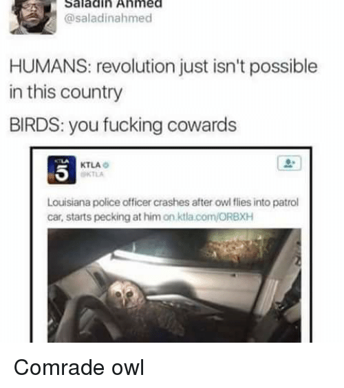 Memes, Birds, and Ktla: Saladin Ahmed  @saladinah med  HUMANS: revolution just isn't possible  in this country  BIRDS: you fucking cowards  KTLA  Louisiana police officer crashes after owl flies into patrol  car, starts pecking at him on ktlacom/ORBXH Comrade owl
